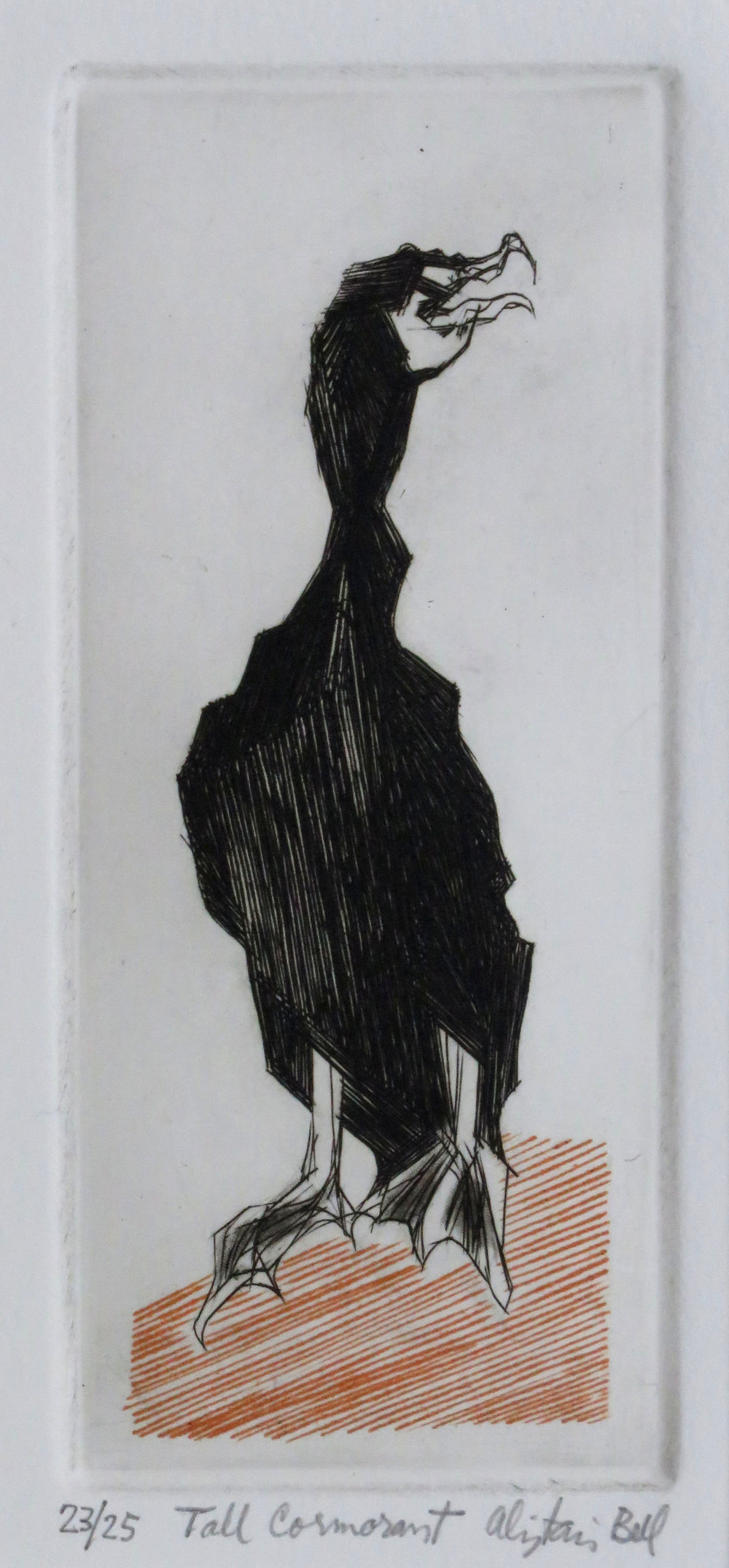 Tall Cormorant colour engraving, roulette.jpg