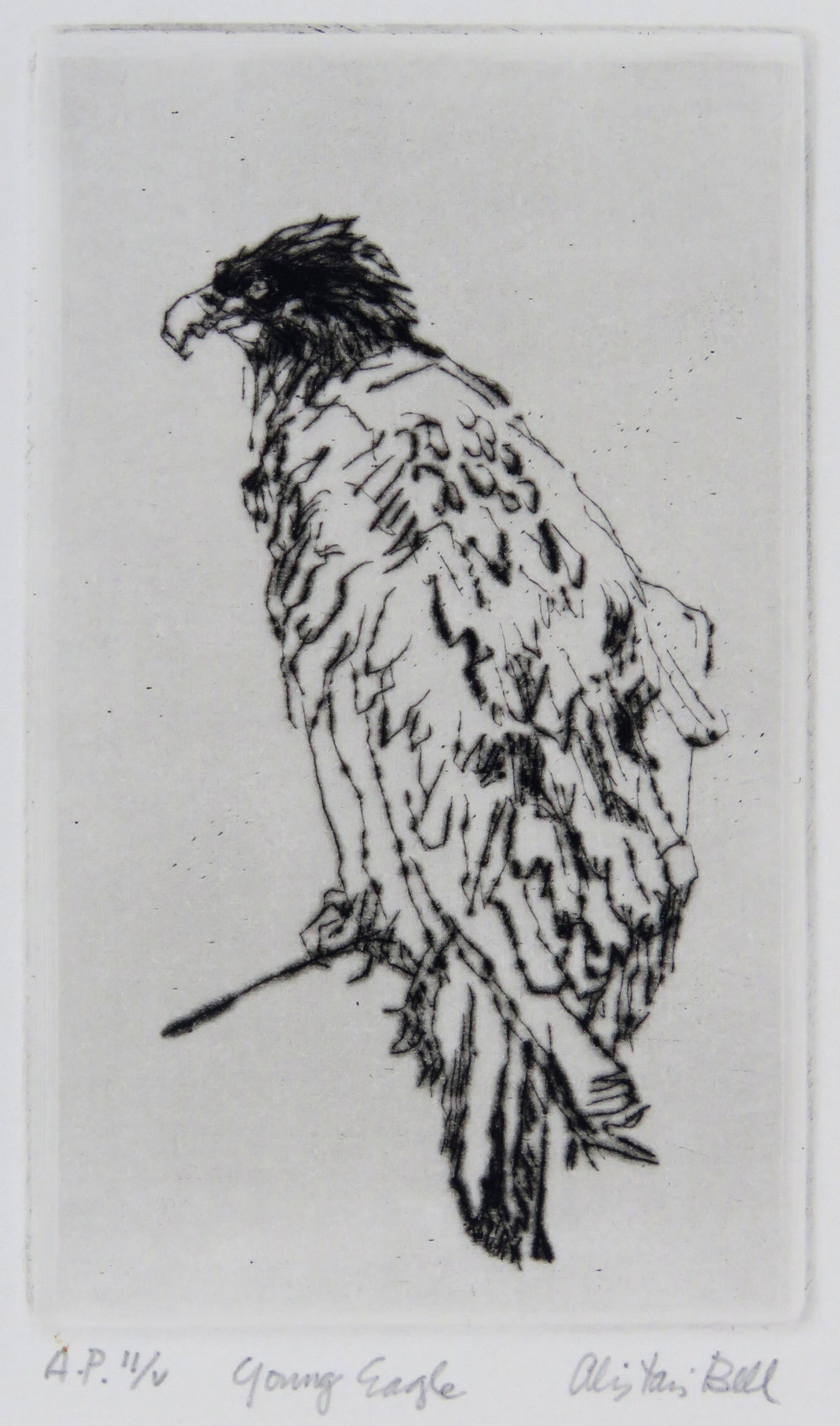 Young Eagle drypoint.jpg