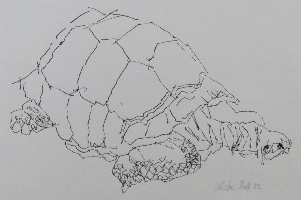 Galapagos Tortoise 13-82 ink.JPG