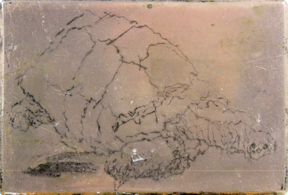 Galapagos Tortoise drypoint plate.jpg