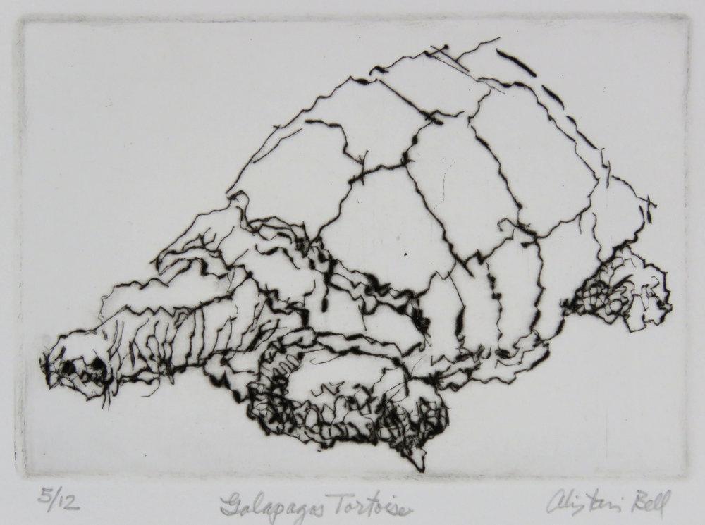 Galapagos Tortoise drypoint.jpg