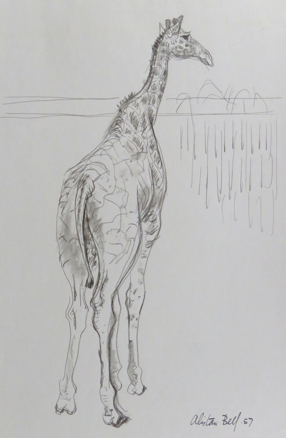 Reticulated Giraffe 13-57 pen & ink.JPG