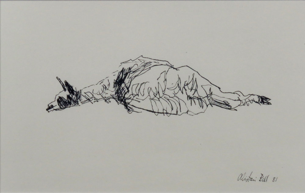 (Young) Llama Reclining 13-81 pen & ink.jpg