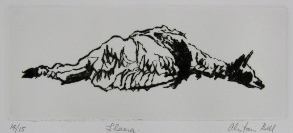 Llama drypoint.jpg