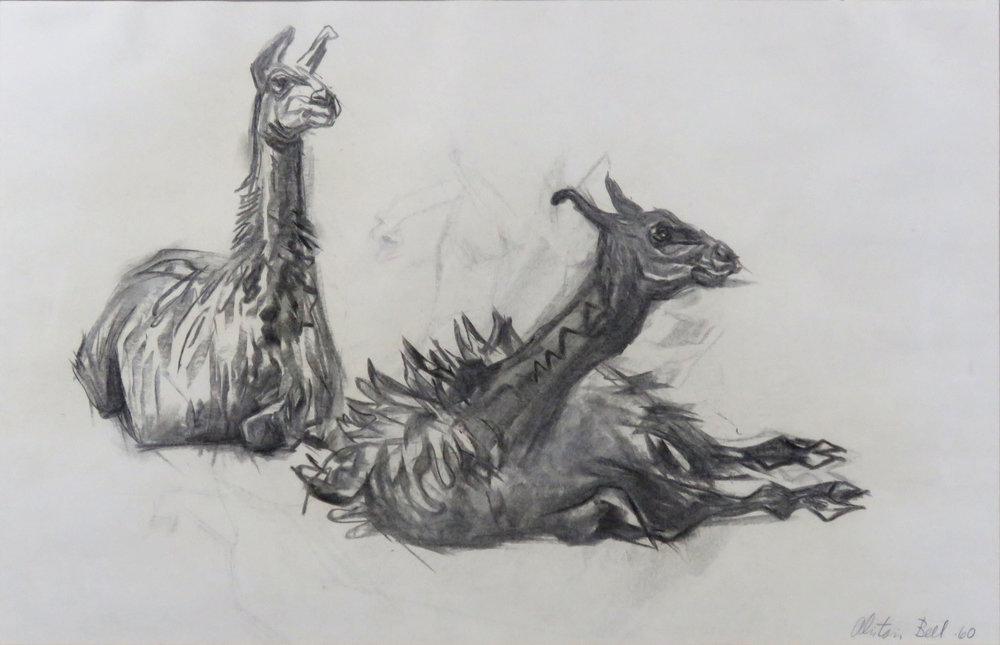 Llamas 69-60 charcoal.jpg