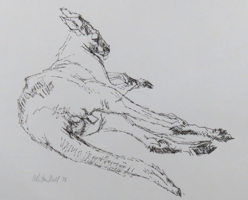 Red Kangaroo Lying to Right 2-78 ink.JPG