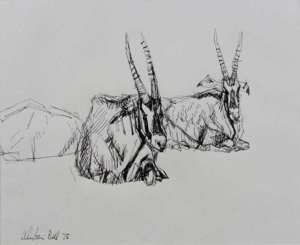 Fringe-Eared Oryx II 14-75 pen & ink.jpg