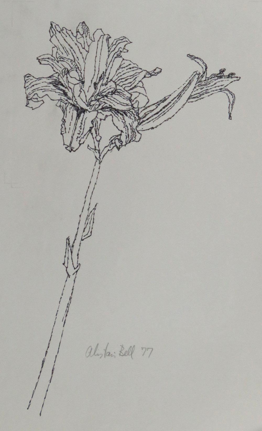 Day Lily 20-77 ink.JPG