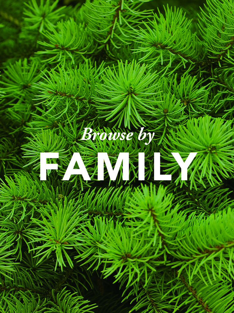 browse-by-family.jpg