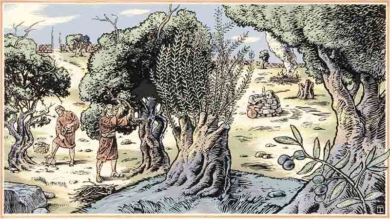 13 The Symbolism And Meaning Of The Allegory Of The Olive Tree