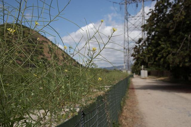 Super Bloom: LA River sand barriers.💧+ ☀️ = 🌼