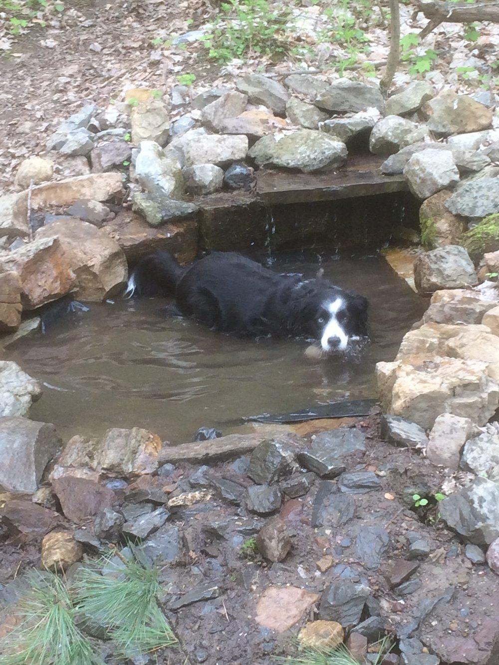 Izze on Mt. Philo, dog heaven