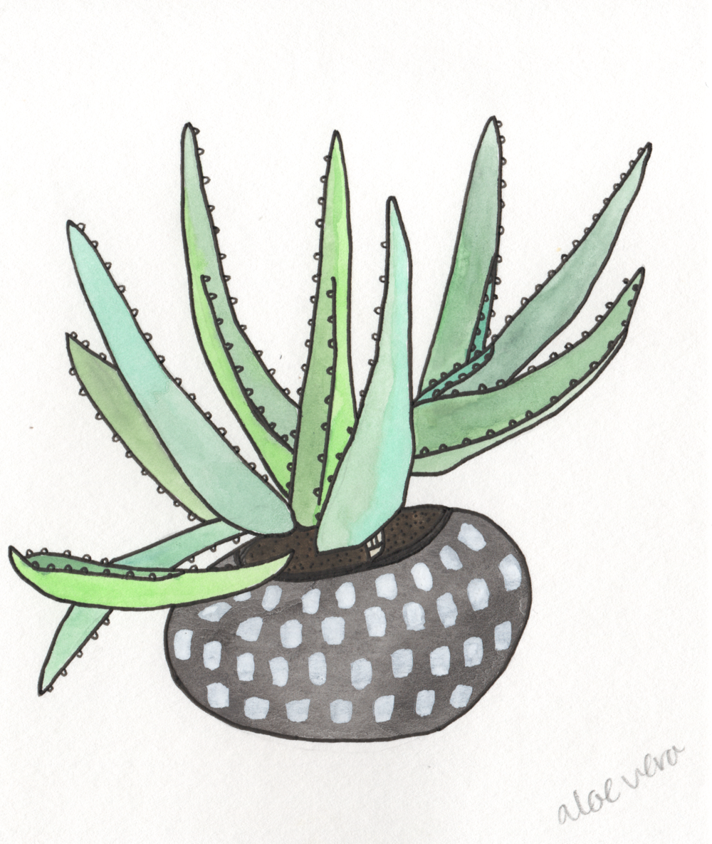 Aloe Vera   Christina Scheppmann Thomas, 2017 Ink & Watercolor on Paper   PRINTS AVAILABLE    Copyright Persika Design Co. LLC - Contact Christina@PersikaDesignCo.com to commission or collaborate!