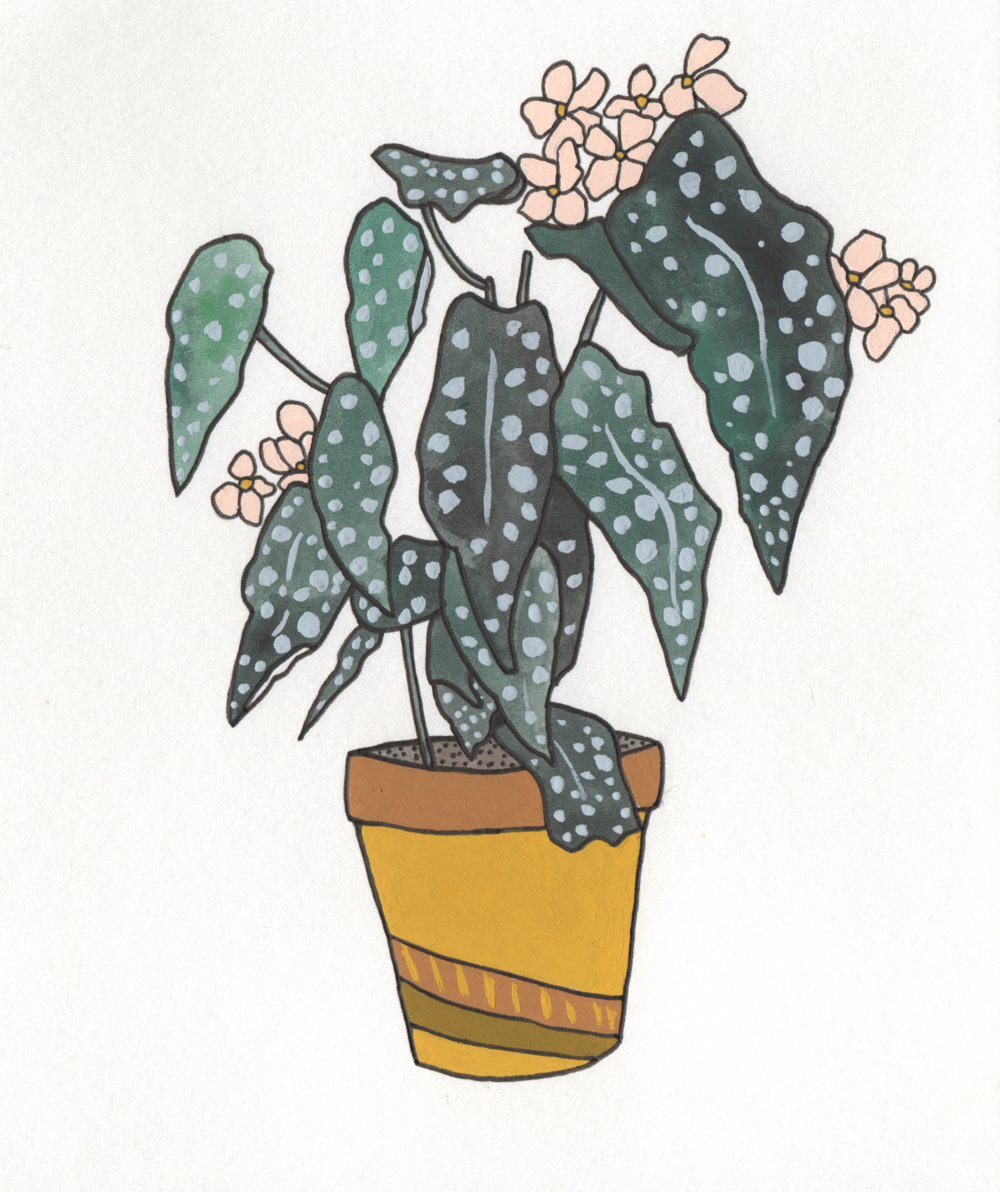 Begonia   Christina Scheppmann Thomas, 2017 Ink & Watercolor on Paper   PRINTS AVAILABLE    Copyright Persika Design Co. LLC - Contact Christina@PersikaDesignCo.com to commission or collaborate!