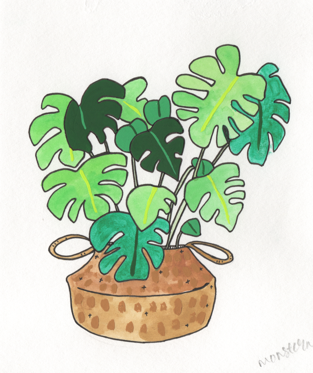 Monstera   Christina Scheppmann Thomas, 2017 Ink & Watercolor on Paper   PRINTS AVAILABLE    Copyright Persika Design Co. LLC - Contact Christina@PersikaDesignCo.com to commission or collaborate!