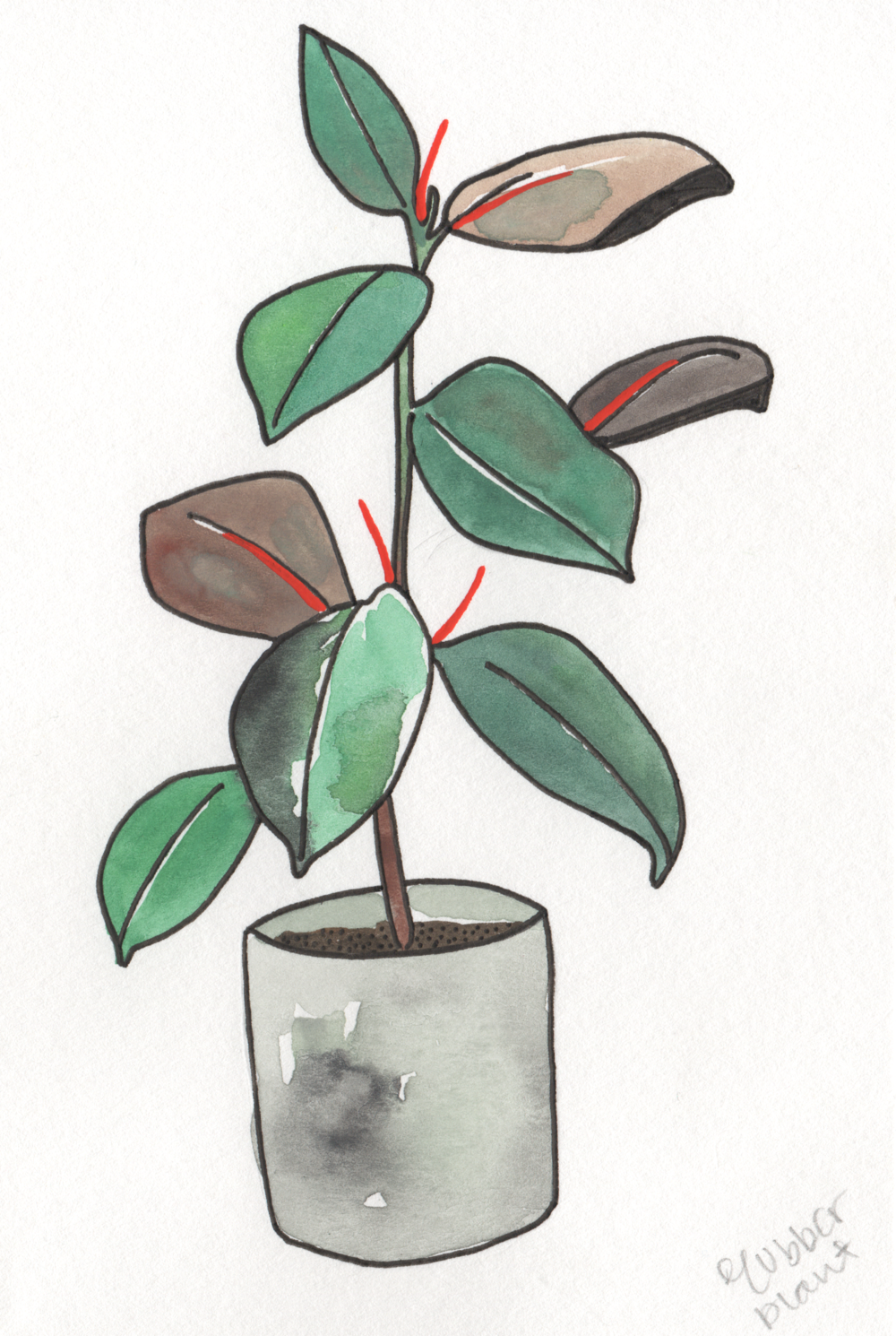 Rubber Plant   Christina Scheppmann Thomas, 2017 Ink & Watercolor on Paper   PRINTS AVAILABLE    Copyright Persika Design Co. LLC - Contact Christina@PersikaDesignCo.com to commission or collaborate!
