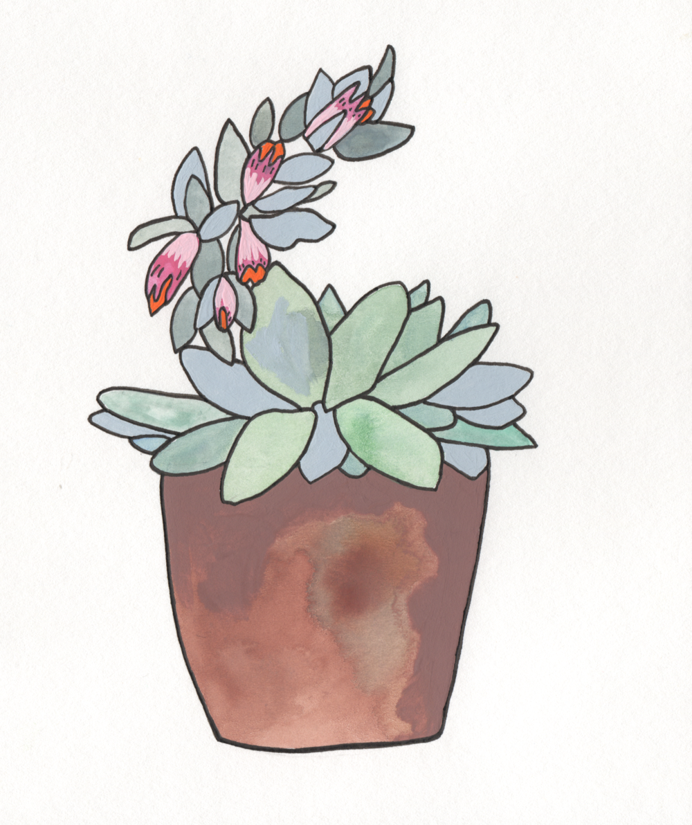 Succulent   Christina Scheppmann Thomas, 2017 Ink & Watercolor on Paper   PRINTS AVAILABLE    Copyright Persika Design Co. LLC - Contact Christina@PersikaDesignCo.com to commission or collaborate!