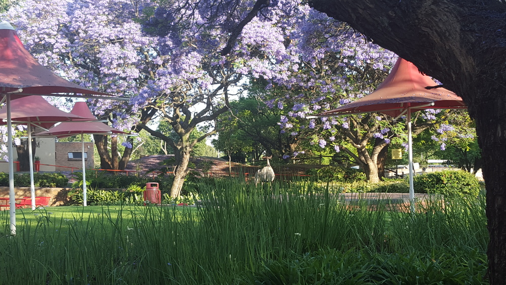 Tshwane university of Technology Art Campus