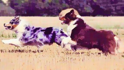 7-High-Energy-Dogs-Large.jpg