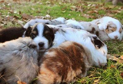 watercolor puppies napping.jpg