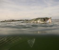fish-from-fitz.jpg