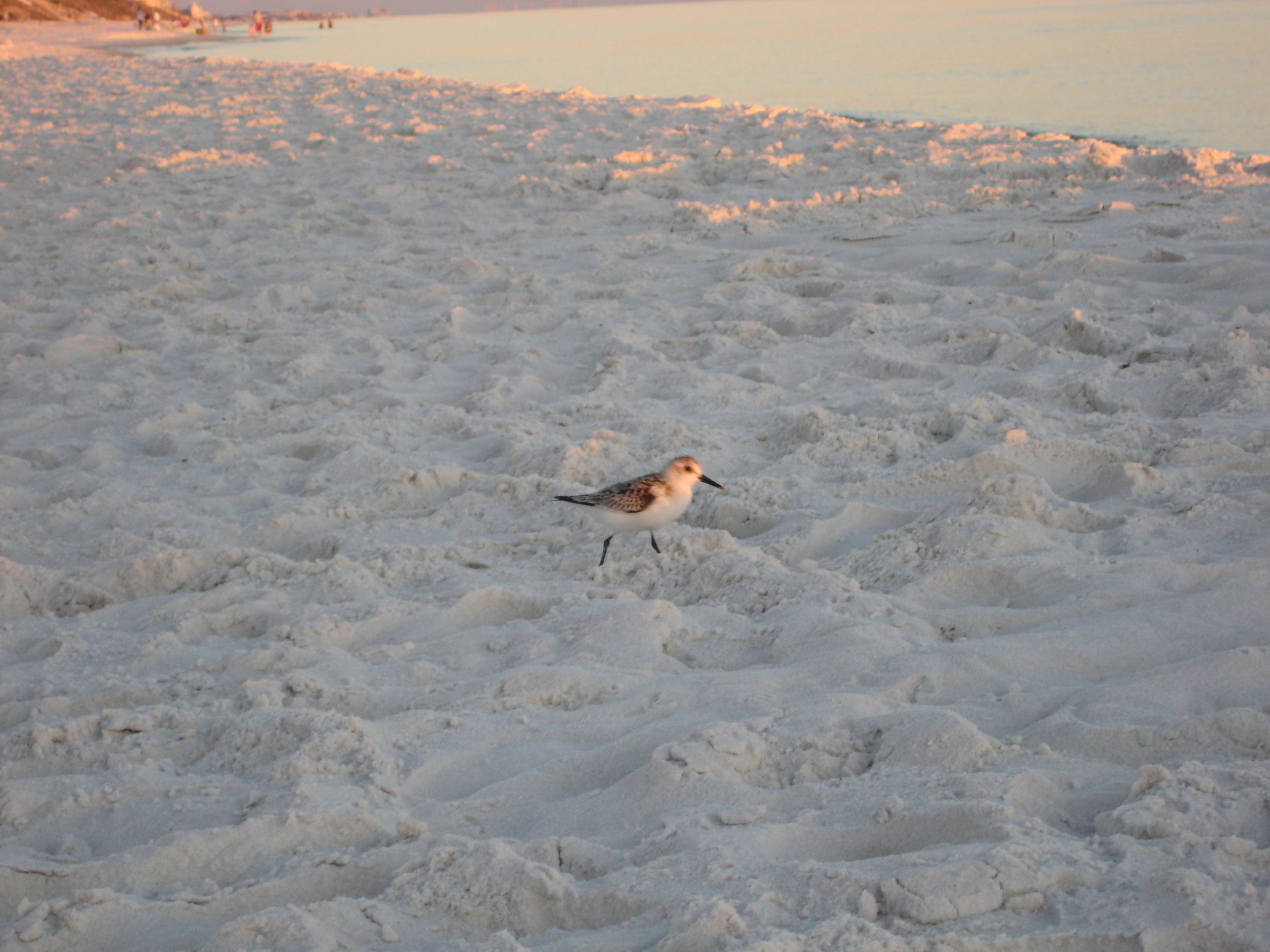 our bird friend who watched the setting sun each night with us
