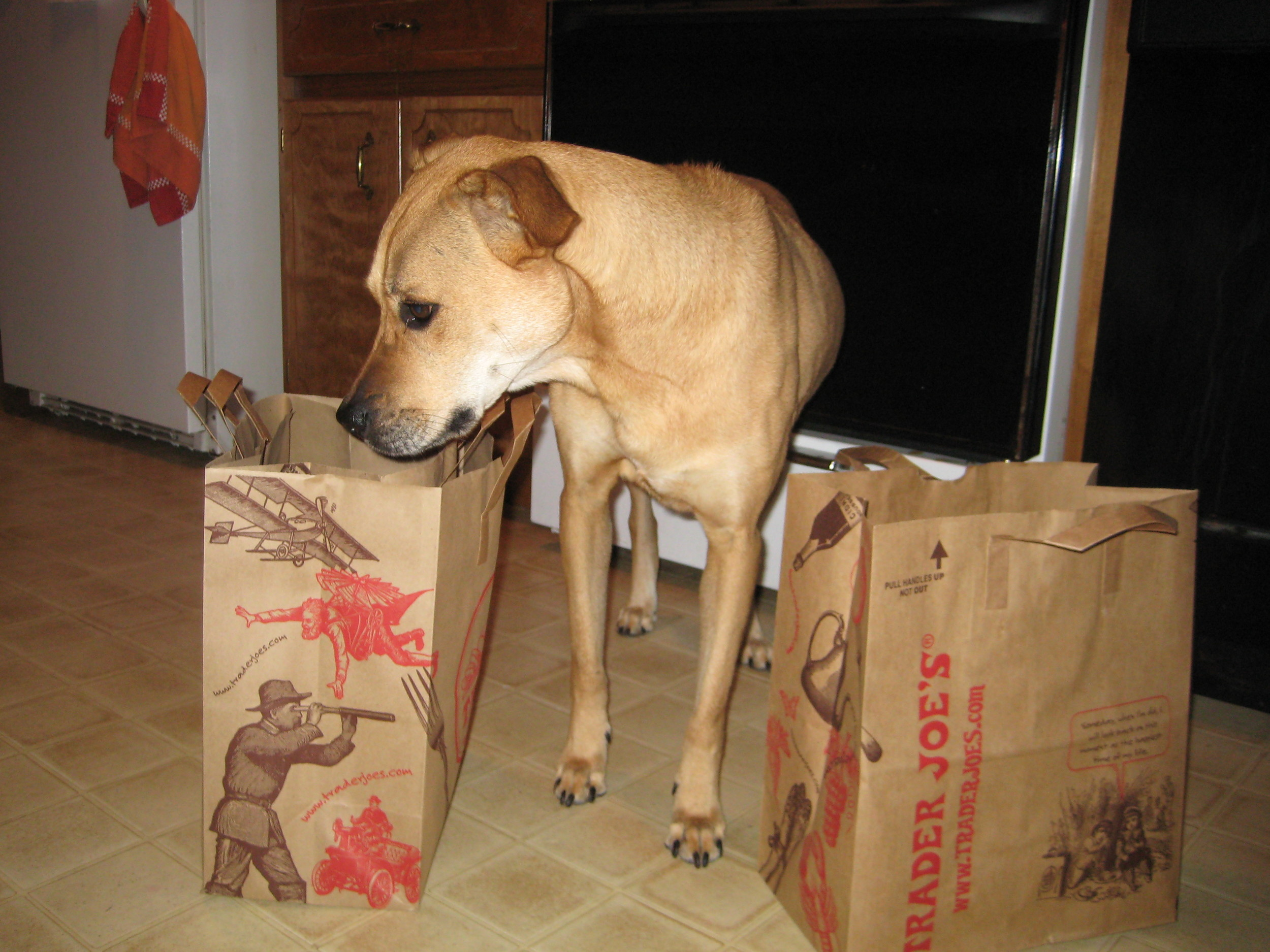 helping to unload the groceries