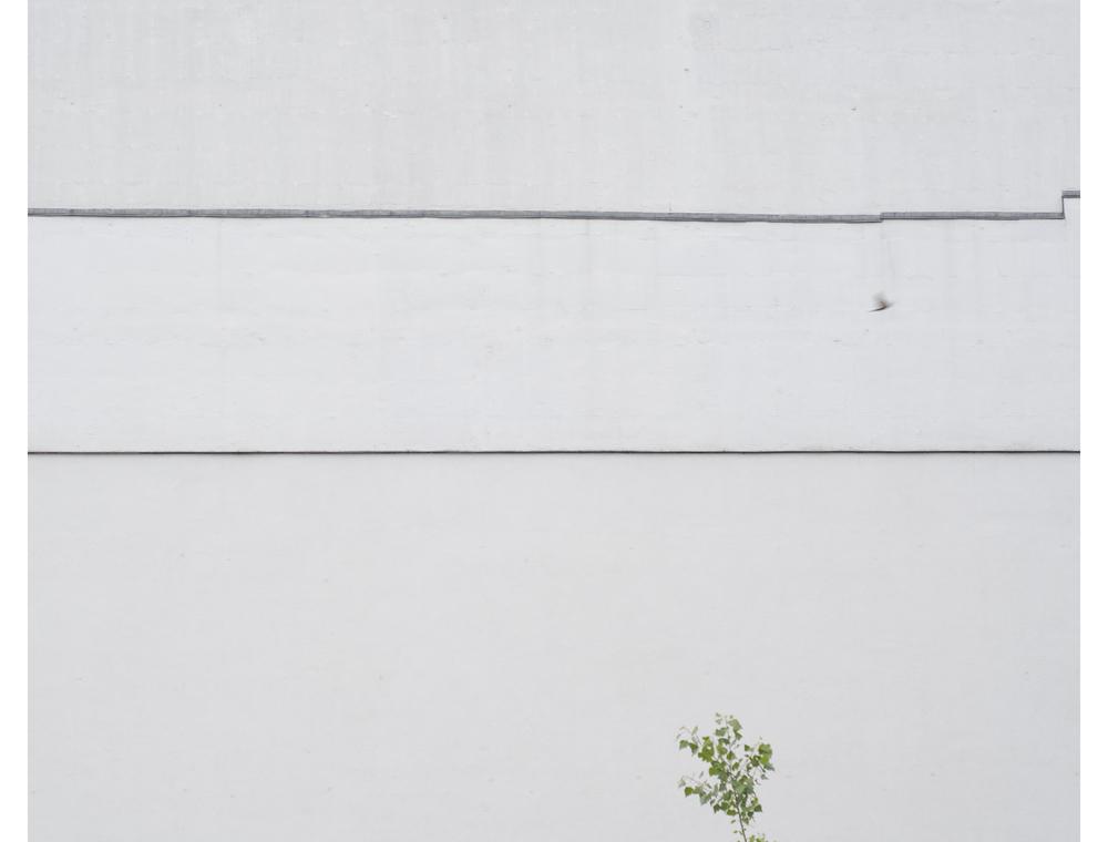 harry tree bird for print_1.jpg