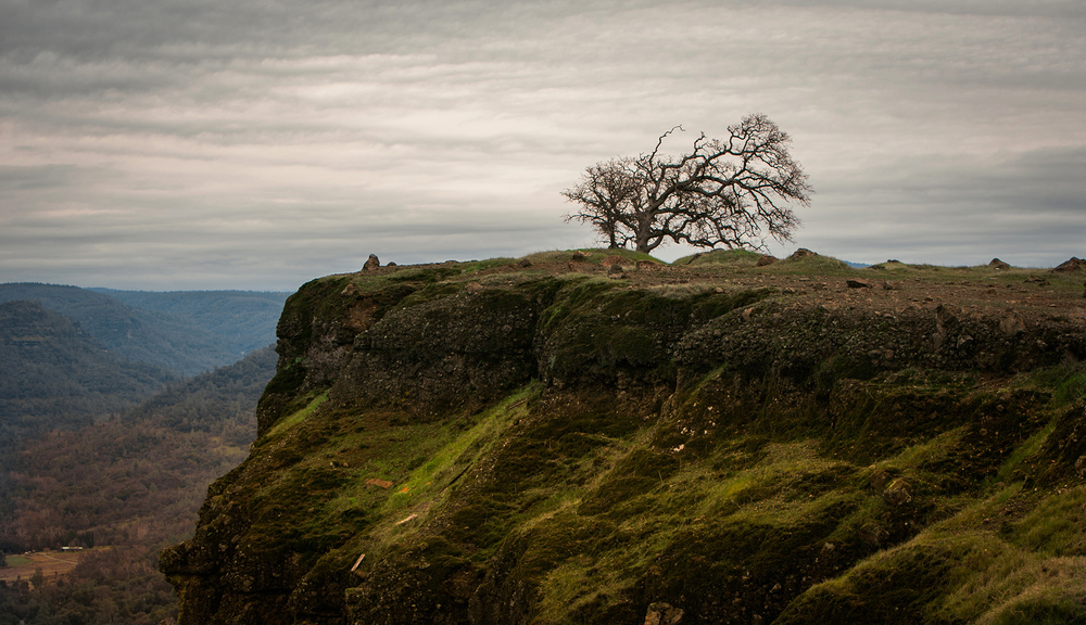 Lone tree at Lookout Point