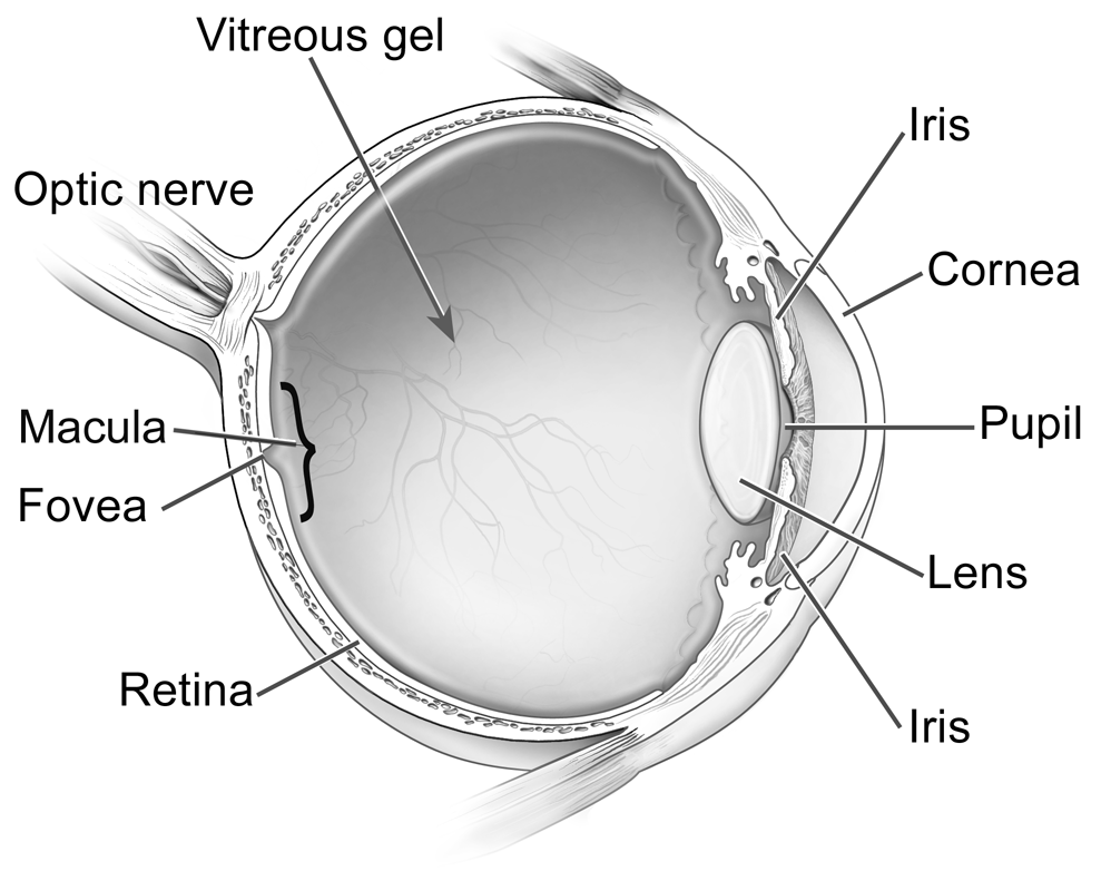 Caring for your vision enochs eye care caring for your eyes ccuart Image collections