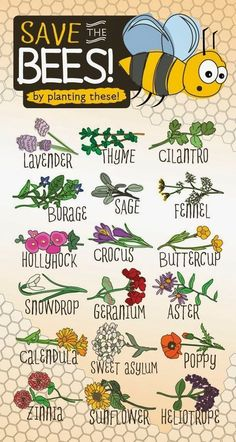 Best 10 Plants For A Small Container Garden.jpg