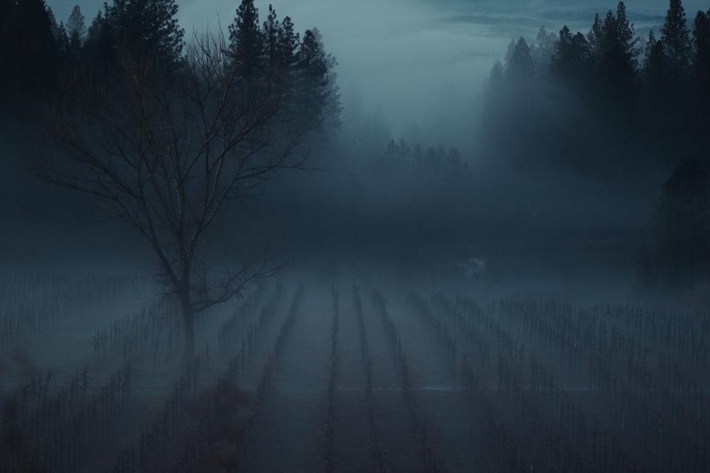 foggy wine.jpg
