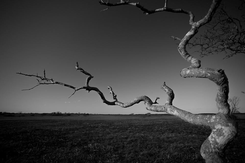 Nantucket - Serengueti