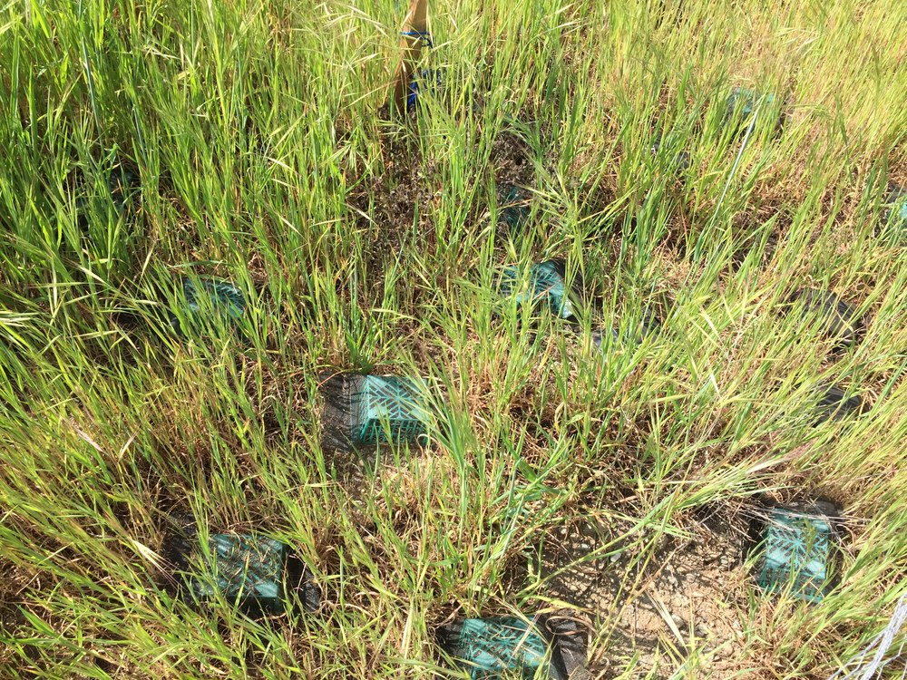 Litterbox in grassland