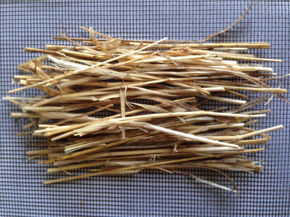 Bromus grass