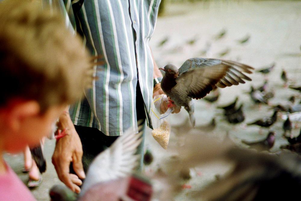 Pigeons Feeding, San Juan, 2015