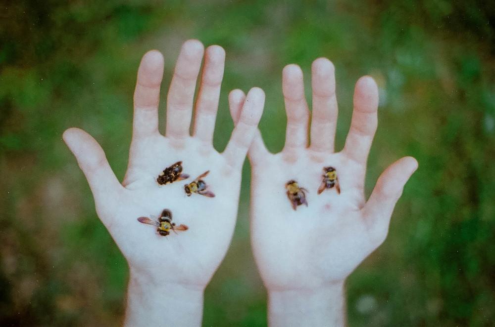 Bees, Pennsylvania, 2015