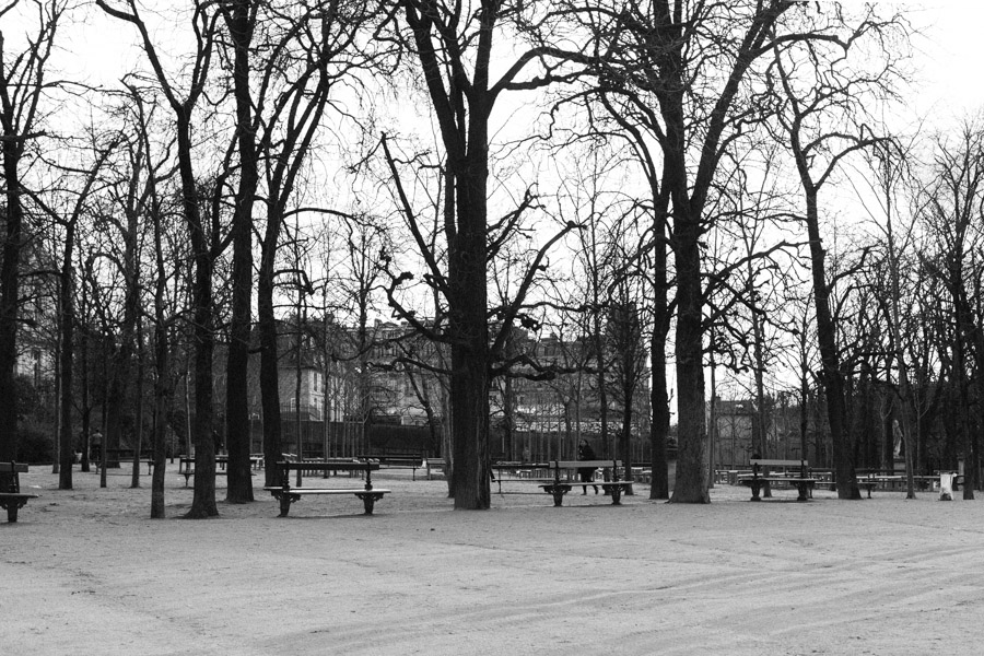 Empty benches and trees at Jardin de Tuileries in Paris