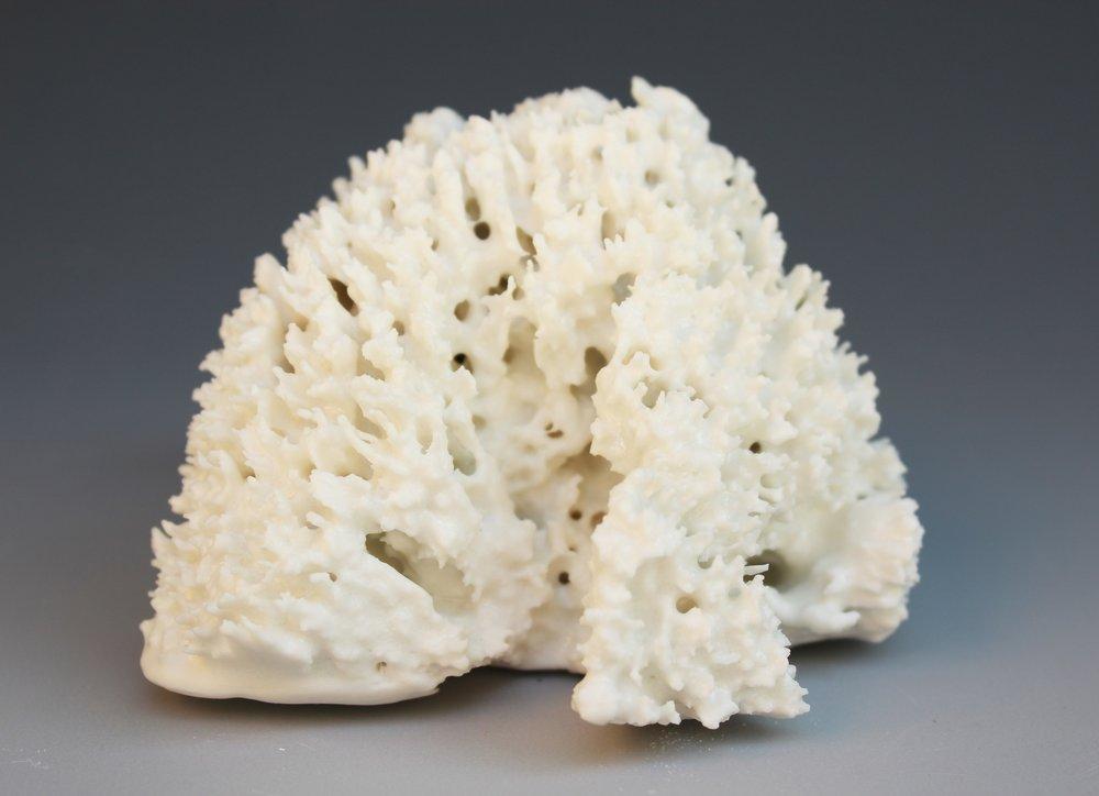 Esponja porcelana 4