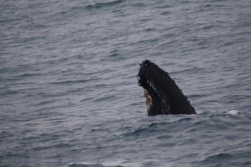 2012-02-25+Humpback+Whale+06.jpg