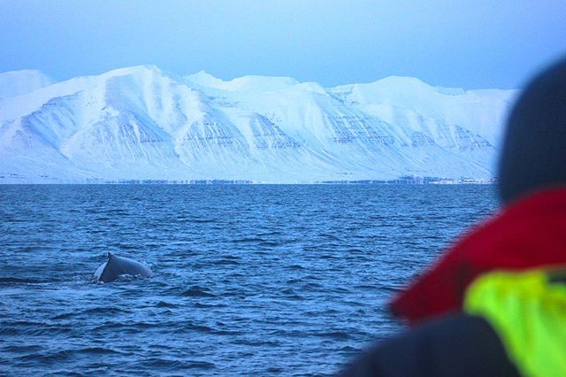 Winter in Eyjafjörður | by crew member Ania! #winter #mountains #cold #whalewatching