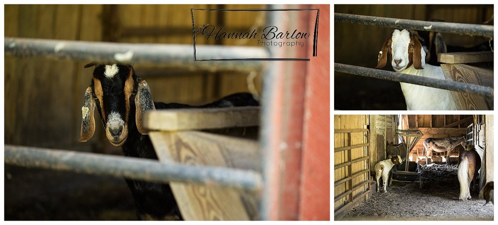 Barn with Inn