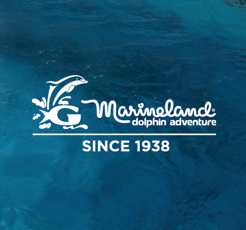 Marineland of Florida View Work→