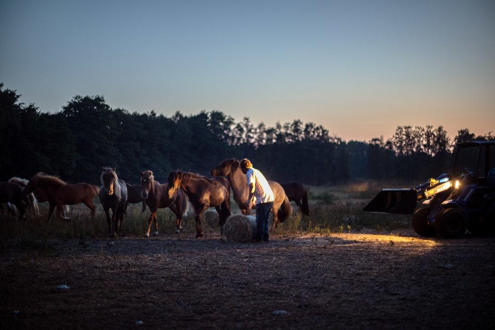 hästar-i-natt.jpg