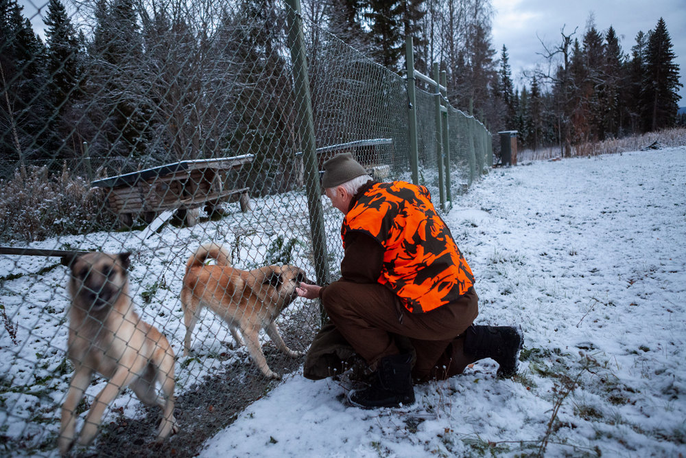 Bertil-på-gård-med-hundarna.jpg