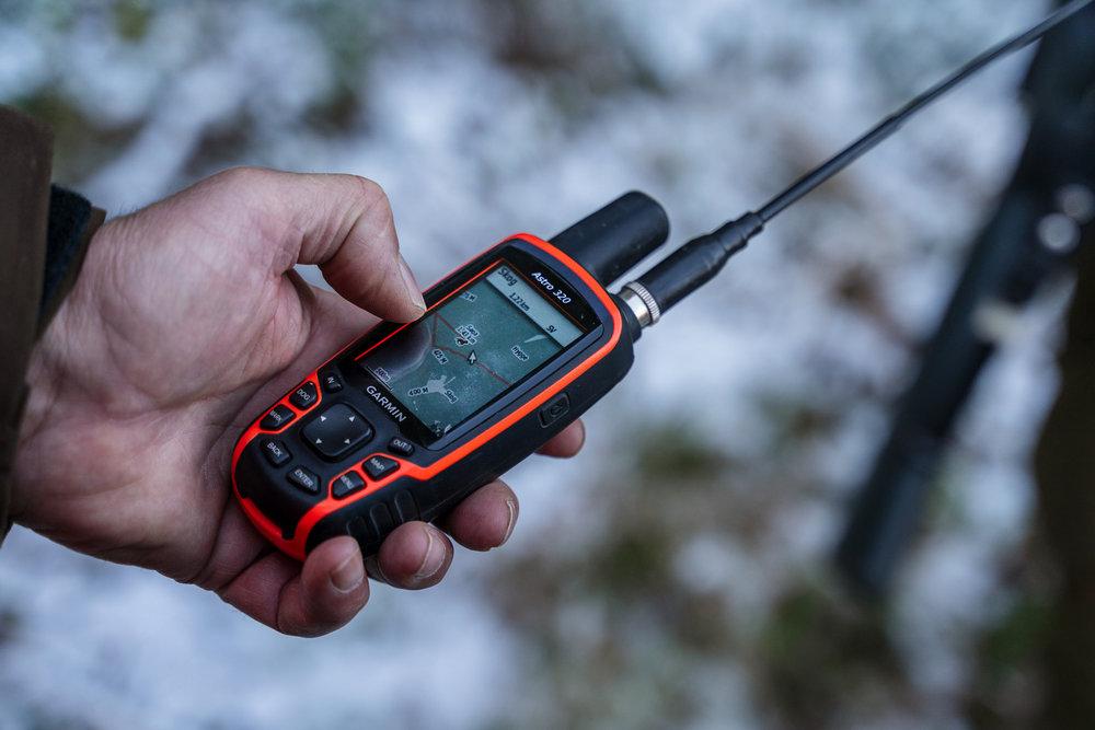 GPS-hund.jpg