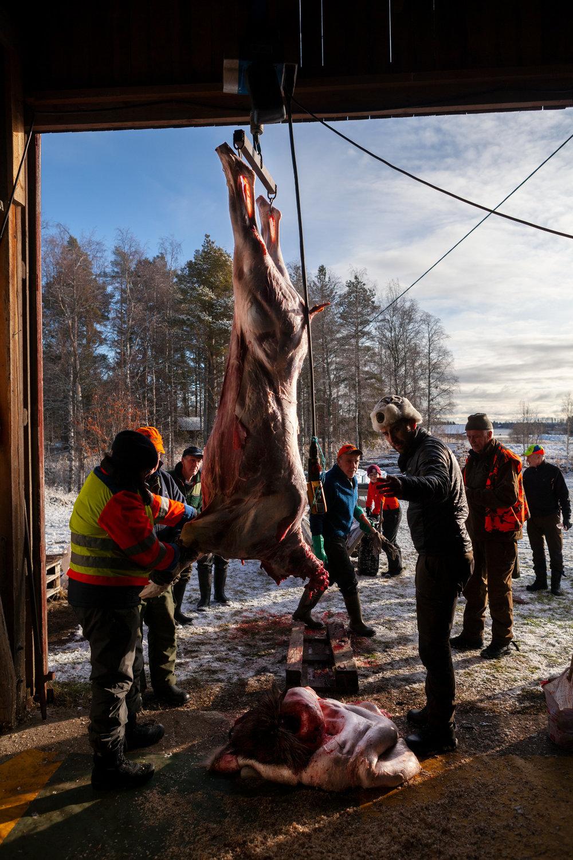 Kött-på-hängning.jpg