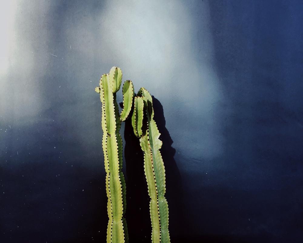 cacti_california.jpg