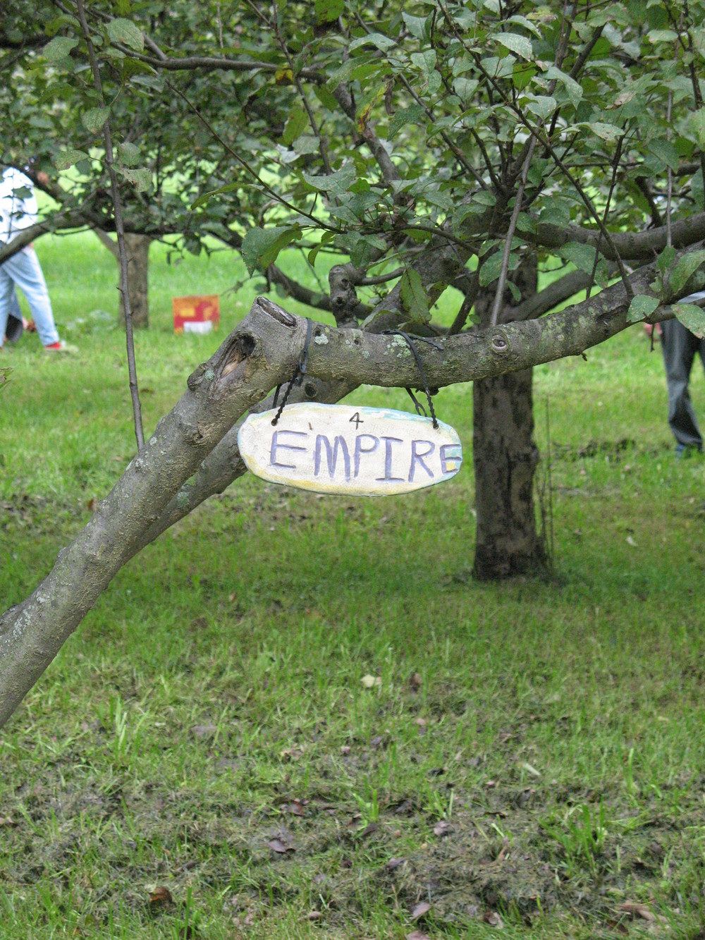 Empire Apple Tree.jpg