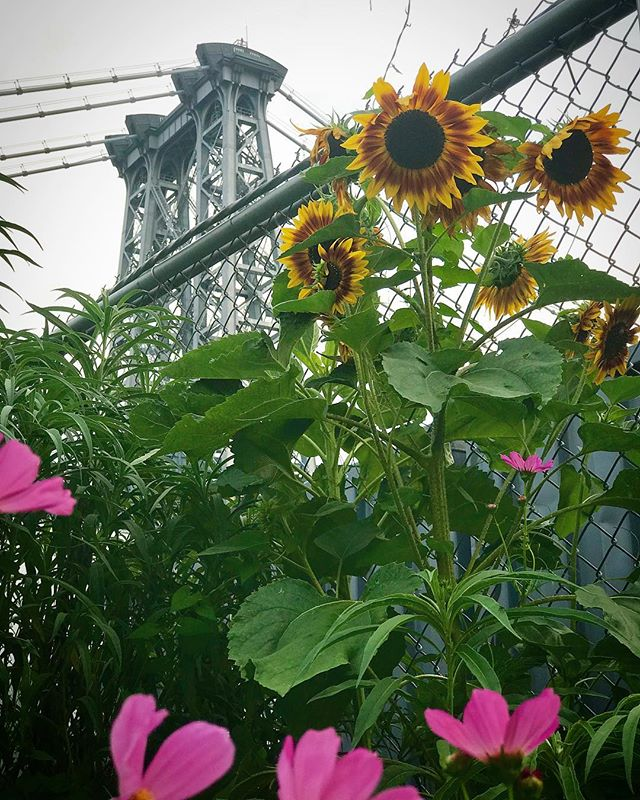 Summer in the City ☀️🌸🌻#flowersfornewyork #summerlove #inspirational #coloryourlife #designerlife #williamsburg @northbrooklynfarms